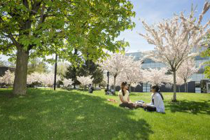 Two students sit on grass in a cherry orchard on UTSC campus.